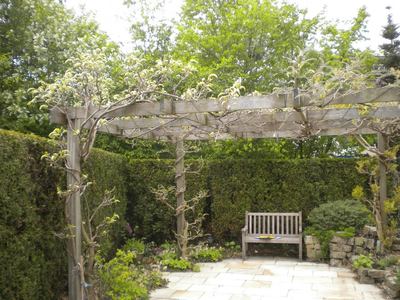 Pergola kleine tuin een pergola in hout of aluminium onze